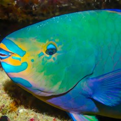 Great Barrier Reef photo 23