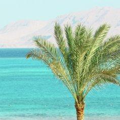 Egypt & Red Sea photo 11