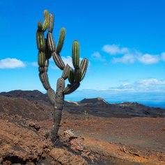 Galapagos Islands photo 12