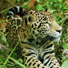 Central America photo 13