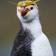 Antarctica photo 24