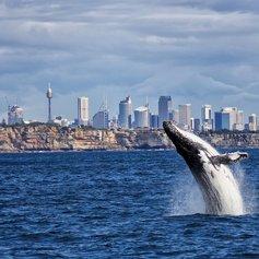 Sydney photo 31