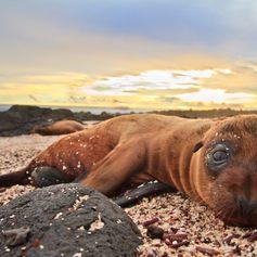 Galapagos Islands photo 25