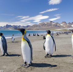 Antarctica, South America Winter Cruising Region