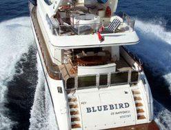 Bluebird of Happiness photo 5