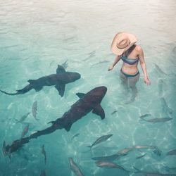 The nurse sharks of Compass Cay Photo 2