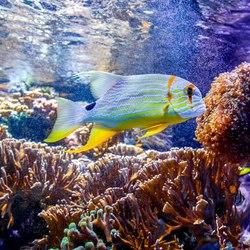 Oceanographic Museum of Monaco Photo 8
