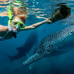Swimming with whale sharks Photo 4
