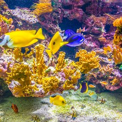 Oceanographic Museum of Monaco Photo 19