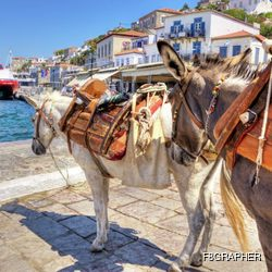 Donkeys on the Picturesque Island of Hydra