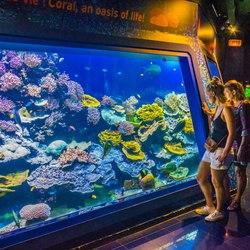 Oceanographic Museum of Monaco Photo 2