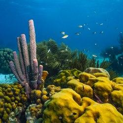 Waterlemon Cay Photo 5
