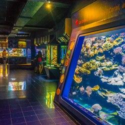 Oceanographic Museum of Monaco Photo 24