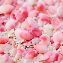 Pink Sand Beach Photo 3