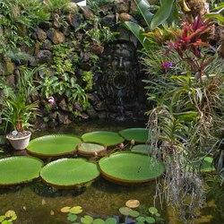 Negombo Thermal Gardens Photo 2