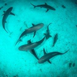 The Aquarium at O'Brien's Cay Photo 6
