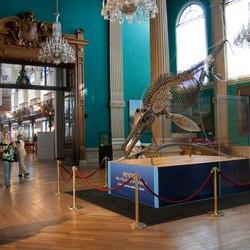 Oceanographic Museum of Monaco Photo 7