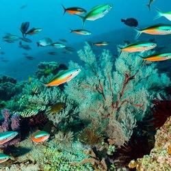Rhone Marine Park Photo 4
