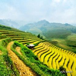 Rice field on terraced in mountain