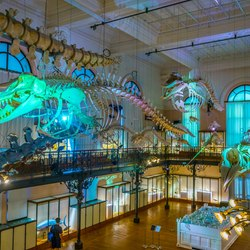 Oceanographic Museum of Monaco Photo 15