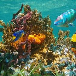 Waterlemon Cay Photo 6