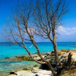 Idyllic Calvi Beach