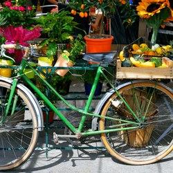 Place Des Lices Market Photo 37