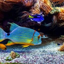 Oceanographic Museum of Monaco Photo 25