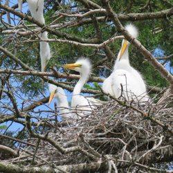 Thanda Bird Walk Photo 4