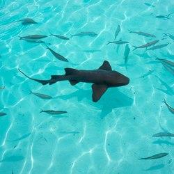 The nurse sharks of Compass Cay Photo 9
