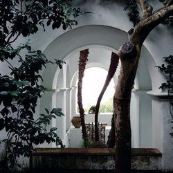 Villa San Michele Photo 13