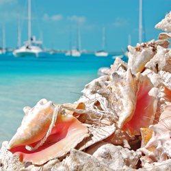 Big Farmer's Cay Sandbar Photo 6