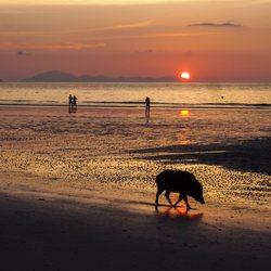 Pig Beach Photo 11