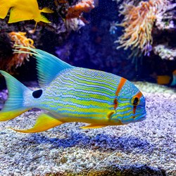 Oceanographic Museum of Monaco Photo 9