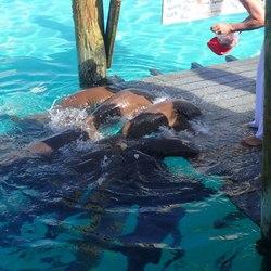 The nurse sharks of Compass Cay Photo 12