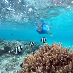 Private Reef Snorkeling Photo 10