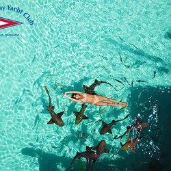 Staniel Cay Yacht Club Photo 18