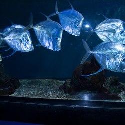 Oceanographic Museum of Monaco Photo 6
