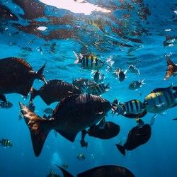 The Aquarium at O'Brien's Cay Photo 2