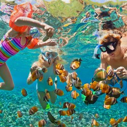Private Reef Snorkeling Photo 3