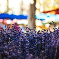 Place Des Lices Market Photo 10