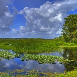 Experience the Drama of the Everglades on a Florida Yacht Charter
