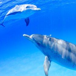 Waterlemon Cay Photo 7