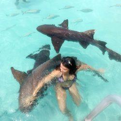 The nurse sharks of Compass Cay Photo 8