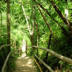 Path throw the jungle