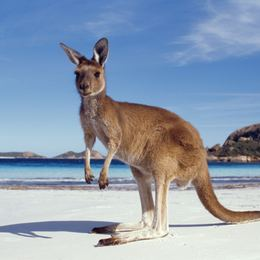 Australia Luxury Yacht Charter
