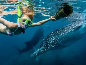The whale shark pod of Thanda Island