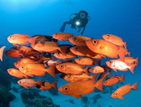 New Marine Sanctuary Offers Unparalleled Diving Opportunities in the Palau Islands
