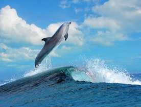 Luxury Yacht Charter Activities Not to Be Missed This Summer