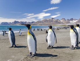 Superyacht 'Plan B' Adventures to Patagonia